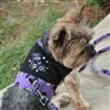Halloween Dog Harness Dress or Vest - Too Cute to Spook