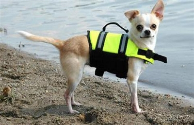 Paws Aboard Yellow Life Jacket
