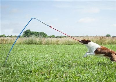 Tethered Tug Dog Toy